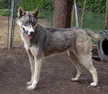 Wolves dogs and humans reading answer